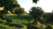 Naturaleza 06